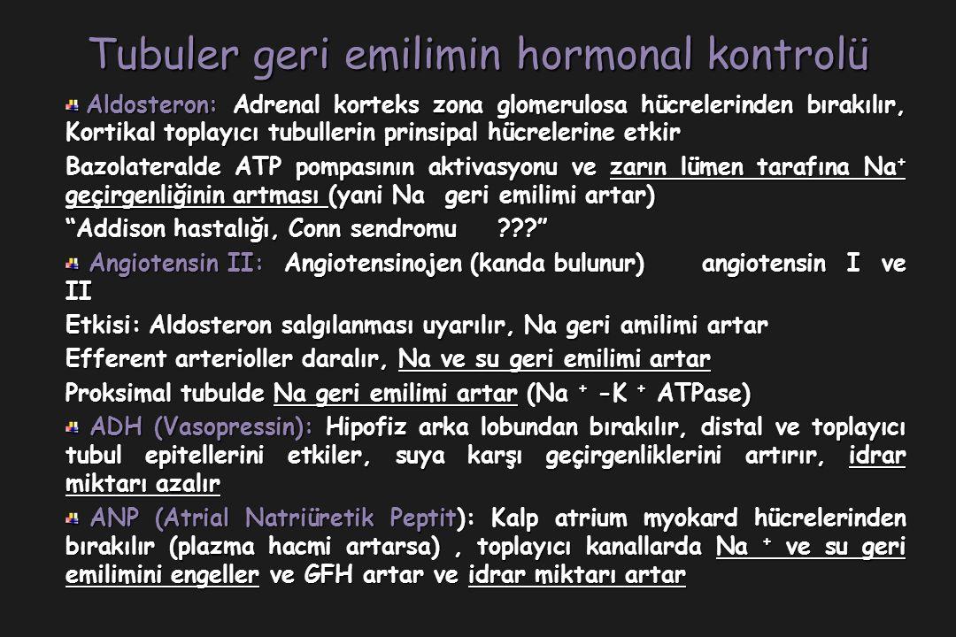 Tubuler geri emilimin hormonal kontrolü Aldosteron: Adrenal korteks zona glomerulosa hücrelerinden bırakılır, Kortikal toplayıcı tubullerin prinsipal hücrelerine etkir Aldosteron: Adrenal korteks zona glomerulosa hücrelerinden bırakılır, Kortikal toplayıcı tubullerin prinsipal hücrelerine etkir Bazolateralde ATP pompasının aktivasyonu ve zarın lümen tarafına Na + geçirgenliğinin artması (yani Na geri emilimi artar) Addison hastalığı, Conn sendromu Angiotensin II: Angiotensinojen (kanda bulunur) angiotensin I ve II Angiotensin II: Angiotensinojen (kanda bulunur) angiotensin I ve II Etkisi: Aldosteron salgılanması uyarılır, Na geri amilimi artar Efferent arterioller daralır, Na ve su geri emilimi artar Proksimal tubulde Na geri emilimi artar (Na + -K + ATPase) ADH (Vasopressin): Hipofiz arka lobundan bırakılır, distal ve toplayıcı tubul epitellerini etkiler, suya karşı geçirgenliklerini artırır, idrar miktarı azalır ADH (Vasopressin): Hipofiz arka lobundan bırakılır, distal ve toplayıcı tubul epitellerini etkiler, suya karşı geçirgenliklerini artırır, idrar miktarı azalır ANP (Atrial Natriüretik Peptit): Kalp atrium myokard hücrelerinden bırakılır (plazma hacmi artarsa), toplayıcı kanallarda Na + ve su geri emilimini engeller ve GFH artar ve idrar miktarı artar ANP (Atrial Natriüretik Peptit): Kalp atrium myokard hücrelerinden bırakılır (plazma hacmi artarsa), toplayıcı kanallarda Na + ve su geri emilimini engeller ve GFH artar ve idrar miktarı artar