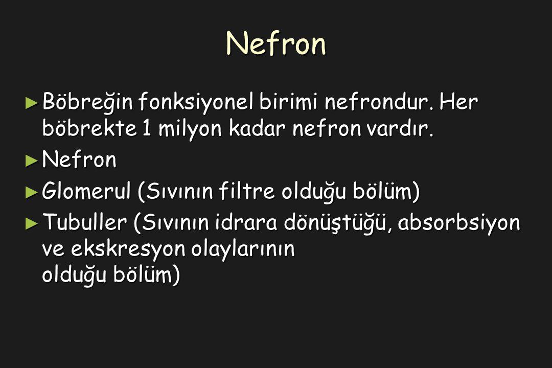 Nefron ► Böbreğin fonksiyonel birimi nefrondur. Her böbrekte 1 milyon kadar nefron vardır.