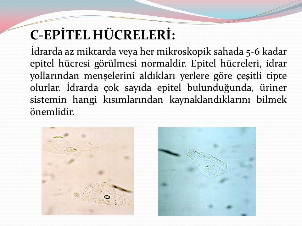 C-EPİTEL HÜCRELERİ: İdrarda az miktarda veya her mikroskopik sahada 5-6 kadar epitel hücresi görülmesi normaldir. Epitel hücreleri, idrar yollarından
