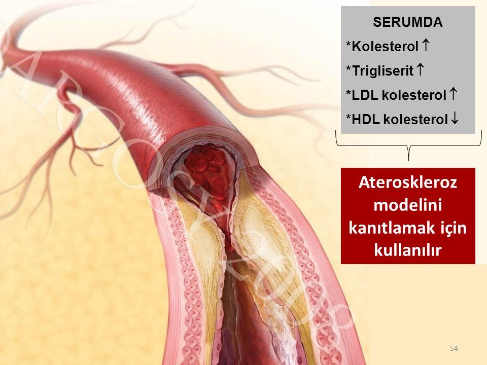 54 SERUMDA *Kolesterol  *Trigliserit  *LDL kolesterol  *HDL kolesterol  Ateroskleroz modelini kanıtlamak için kullanılır