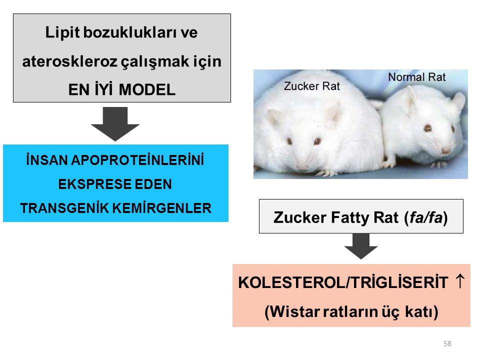 58 Zucker Fatty Rat (fa/fa) Lipit bozuklukları ve ateroskleroz çalışmak için EN İYİ MODEL İNSAN APOPROTEİNLERİNİ EKSPRESE EDEN TRANSGENİK KEMİRGENLER KOLESTEROL/TRİGLİSERİT  (Wistar ratların üç katı)