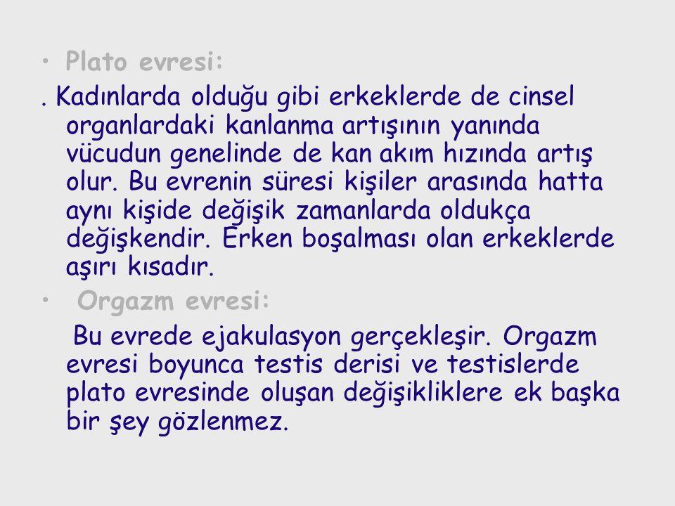 Plato evresi:.
