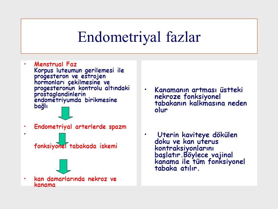 Endometriyal fazlar Menstrual Faz Korpus luteumun gerilemesi ile progesteron ve estrojen hormonları çekilmesine ve progesteronun kontrolu altındaki prostaglandinlerin endometriyumda birikmesine bağlı Endometriyal arterlerde spazm fonksiyonel tabakada iskemi kan damarlarında nekroz ve kanama Kanamanın artması üstteki nekroze fonksiyonel tabakanın kalkmasına neden olur Uterin kaviteye dökülen doku ve kan uterus kontraksiyonlarını başlatır.Böylece vajinal kanama ile tüm fonksiyonel tabaka atılır.