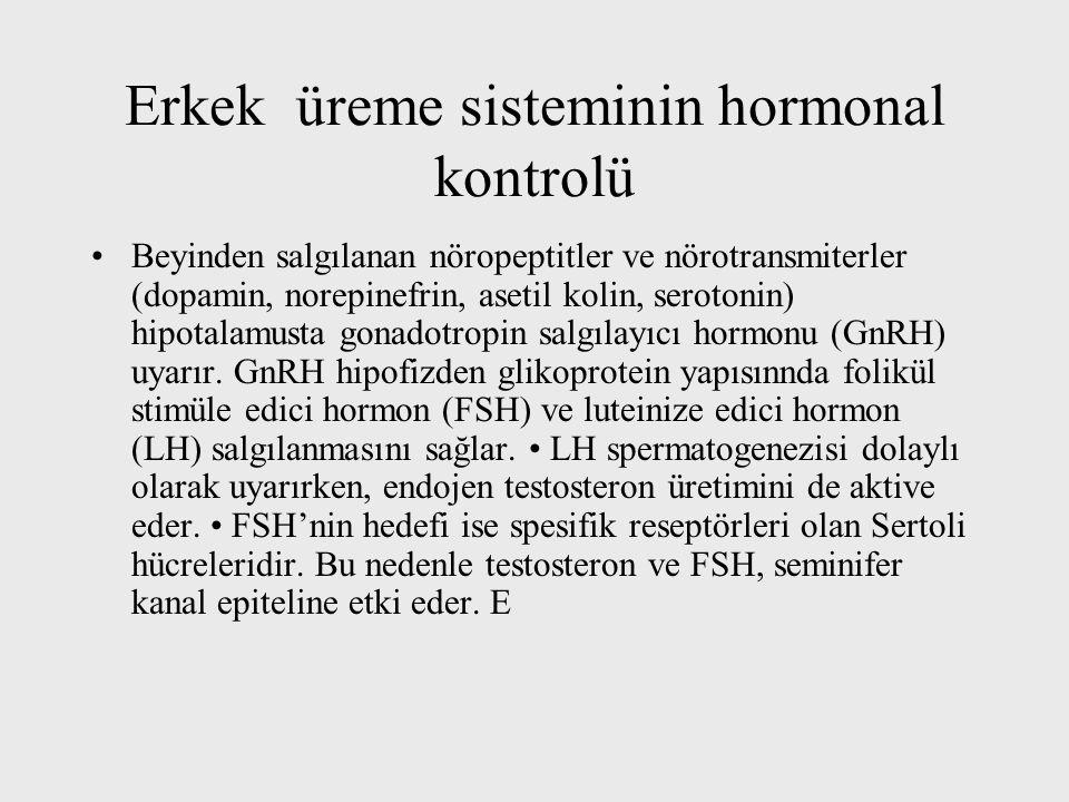 Erkek üreme sisteminin hormonal kontrolü Beyinden salgılanan nöropeptitler ve nörotransmiterler (dopamin, norepinefrin, asetil kolin, serotonin) hipotalamusta gonadotropin salgılayıcı hormonu (GnRH) uyarır.