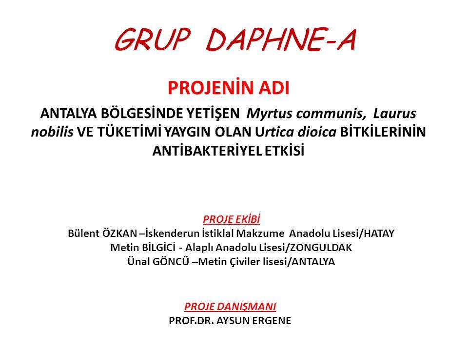 GRUP DAPHNE-A PROJENİN ADI ANTALYA BÖLGESİNDE YETİŞEN Myrtus communis, Laurus nobilis VE TÜKETİMİ YAYGIN OLAN Urtica dioica BİTKİLERİNİN ANTİBAKTERİYE