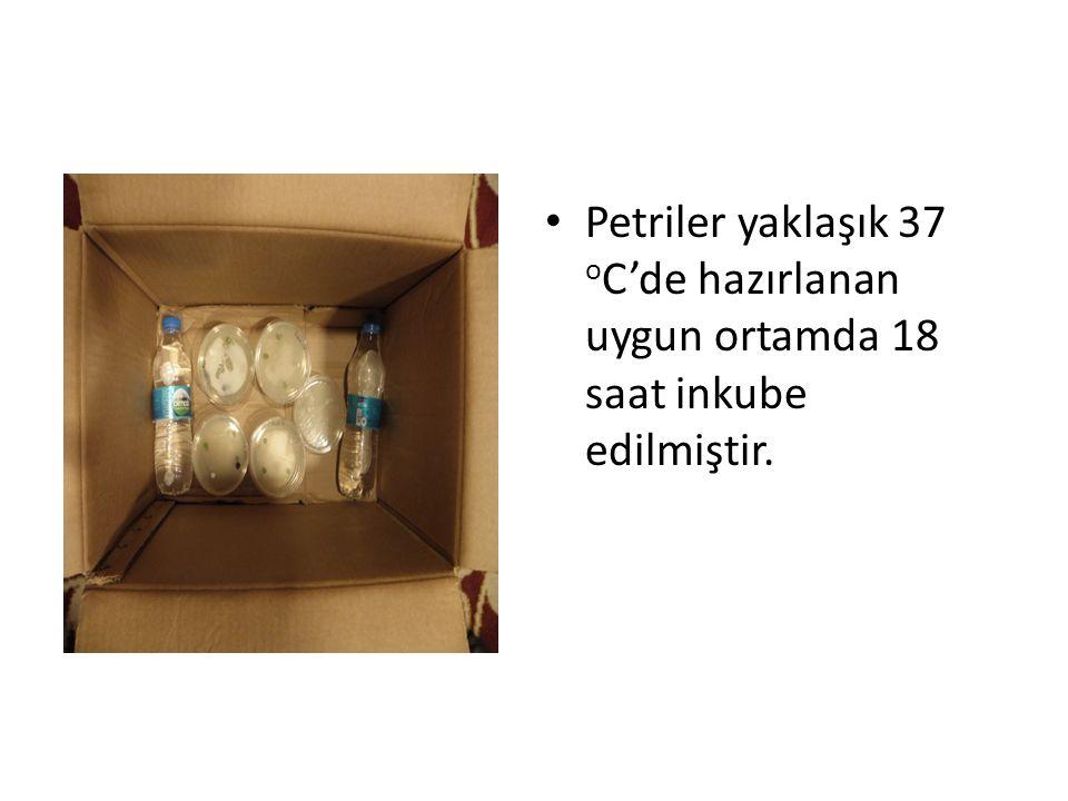 Petriler yaklaşık 37 o C'de hazırlanan uygun ortamda 18 saat inkube edilmiştir.