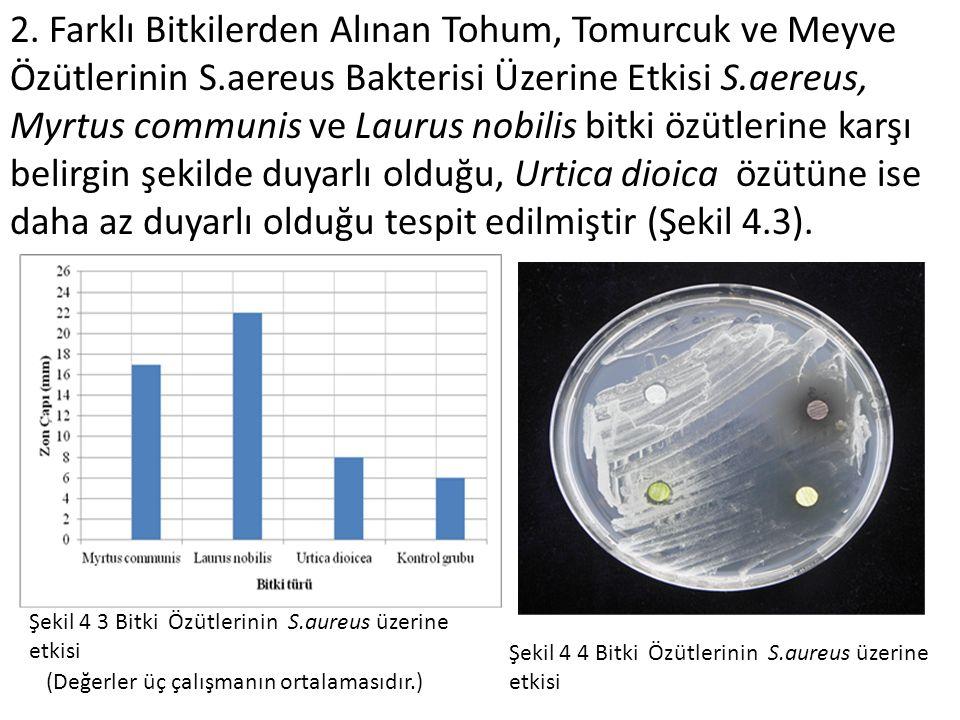 2. Farklı Bitkilerden Alınan Tohum, Tomurcuk ve Meyve Özütlerinin S.aereus Bakterisi Üzerine Etkisi S.aereus, Myrtus communis ve Laurus nobilis bitki
