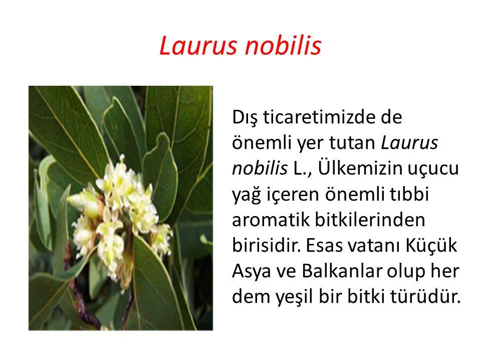 Laurus nobilis Dış ticaretimizde de önemli yer tutan Laurus nobilis L., Ülkemizin uçucu yağ içeren önemli tıbbi aromatik bitkilerinden birisidir. Esas