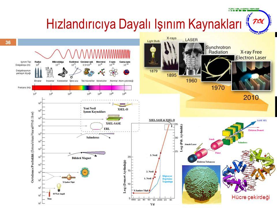 Hızlandırıcıya Dayalı Işınım Kaynakları 36 Hücre çekirdeği