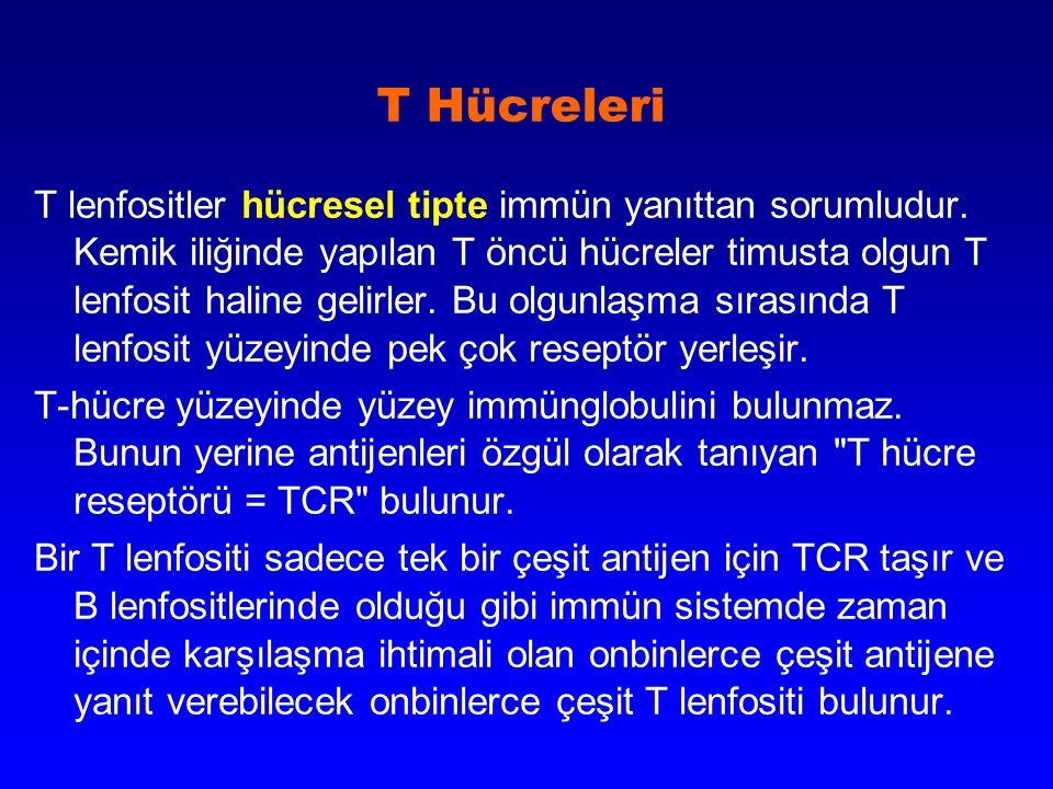 T Hücreleri T lenfositler hücresel tipte immün yanıttan sorumludur. Kemik iliğinde yapılan T öncü hücreler timusta olgun T lenfosit haline gelirler. B