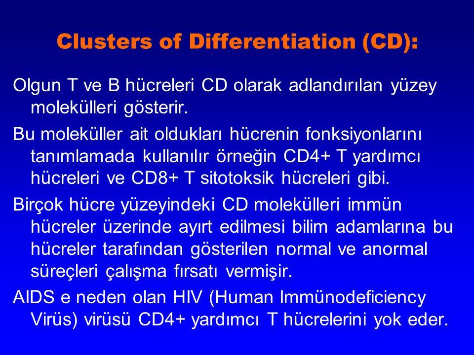 Clusters of Differentiation (CD): Olgun T ve B hücreleri CD olarak adlandırılan yüzey molekülleri gösterir. Bu moleküller ait oldukları hücrenin fonks
