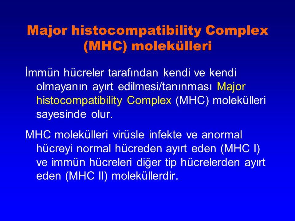 Major histocompatibility Complex (MHC) molekülleri İmmün hücreler tarafından kendi ve kendi olmayanın ayırt edilmesi/tanınması Major histocompatibilit