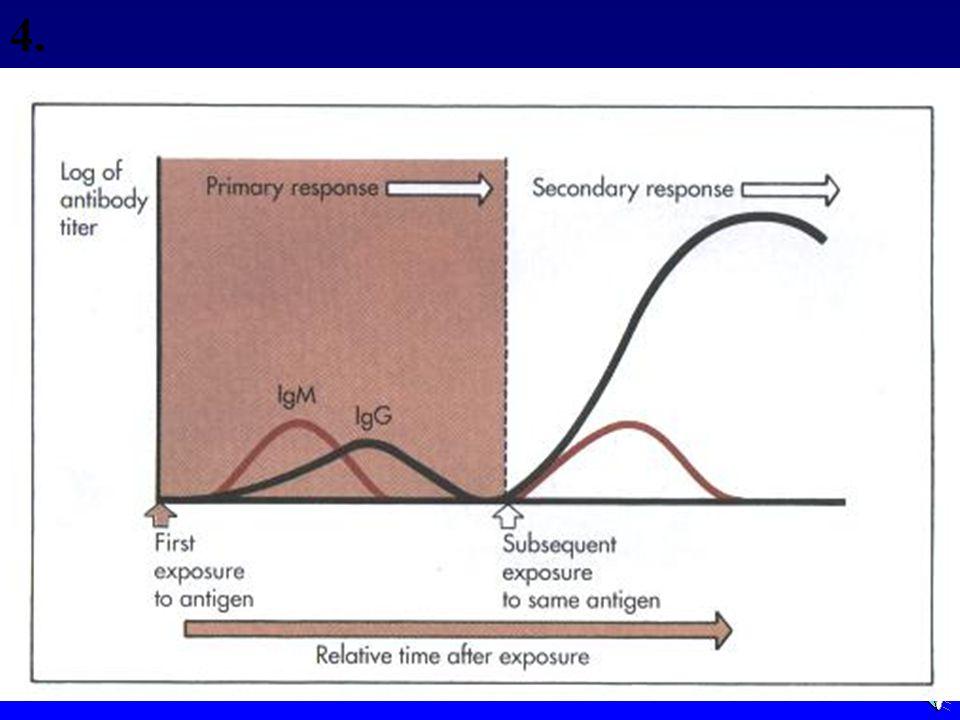 Primary & Secondary Immunity 4.
