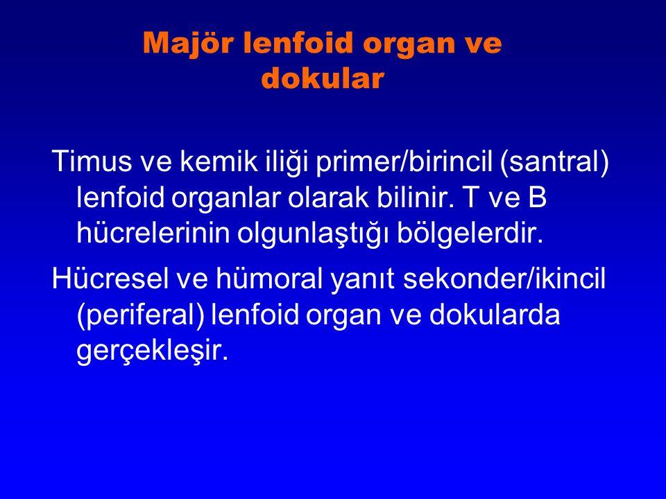 İmmün Hücrelerin gelişimi B Lenfositler Lenfoblastlar Kemik iliği matürasyonu Timus Regülatör T hücreleri effektör T hücreleri Bellek hücreleri Plazma hücreleri Yardımcı T hücreleri Baskılayıcı T hücreleri Sitotoksik T hücreleri Antikorlar Hümoral YanıtHücresel (hücre-aracılı) Yanıt Kemik İliği