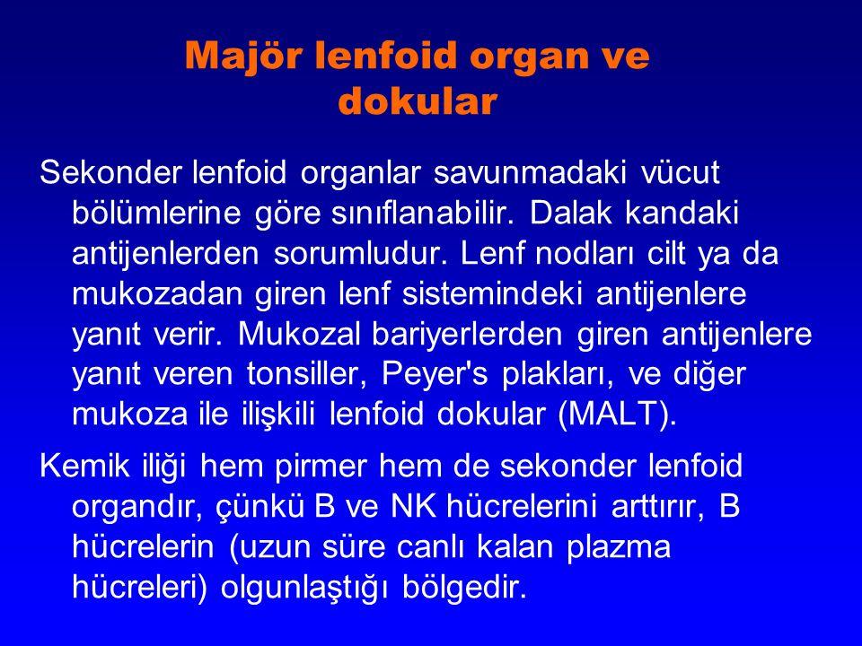 Majör lenfoid organ ve dokular Sekonder lenfoid organlar savunmadaki vücut bölümlerine göre sınıflanabilir. Dalak kandaki antijenlerden sorumludur. Le