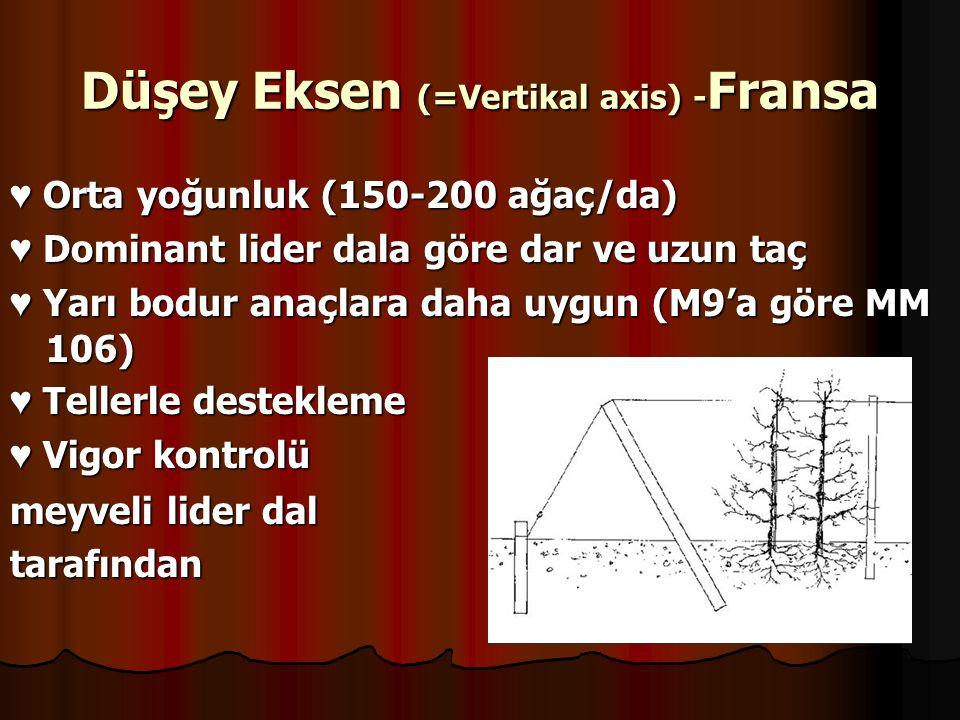 Düşey Eksen (=Vertikal axis) - Fransa ♥ Orta yoğunluk (150-200 ağaç/da) ♥ Dominant lider dala göre dar ve uzun taç ♥ Yarı bodur anaçlara daha uygun (M