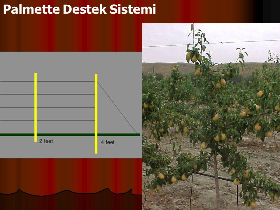 Palmette Destek Sistemi