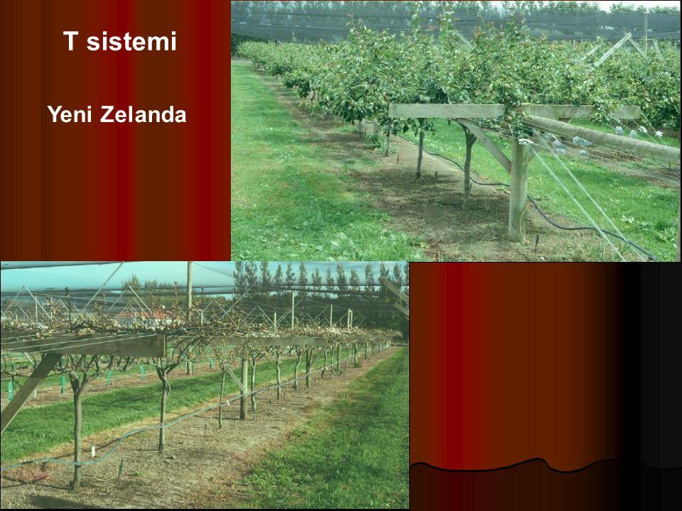 T sistemi Yeni Zelanda