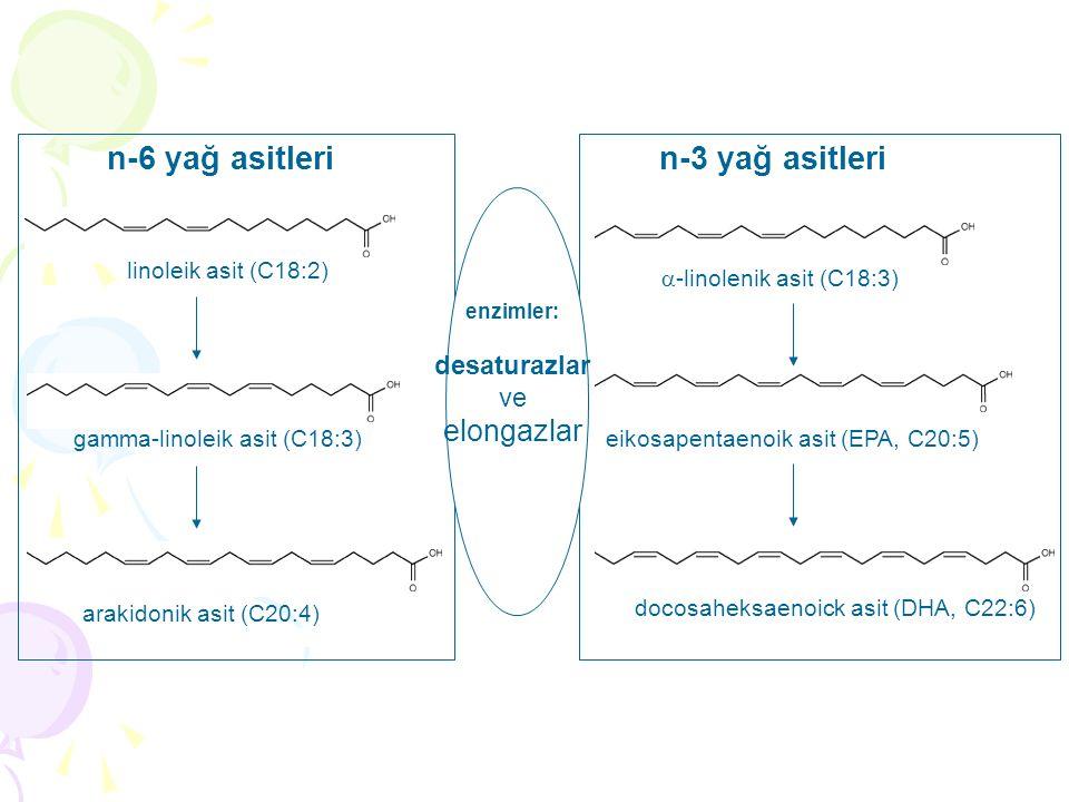 linoleik asit (C18:2)  -linolenik asit (C18:3) eikosapentaenoik asit (EPA, C20:5) docosaheksaenoick asit (DHA, C22:6) gamma-linoleik asit (C18:3) arakidonik asit (C20:4) n-6 yağ asitlerin-3 yağ asitleri enzimler: desaturazlar ve elongazlar