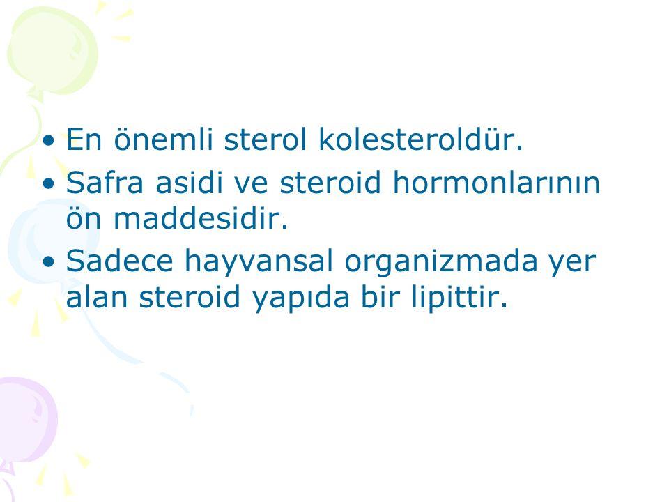En önemli sterol kolesteroldür.Safra asidi ve steroid hormonlarının ön maddesidir.