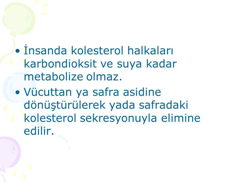 İnsanda kolesterol halkaları karbondioksit ve suya kadar metabolize olmaz.