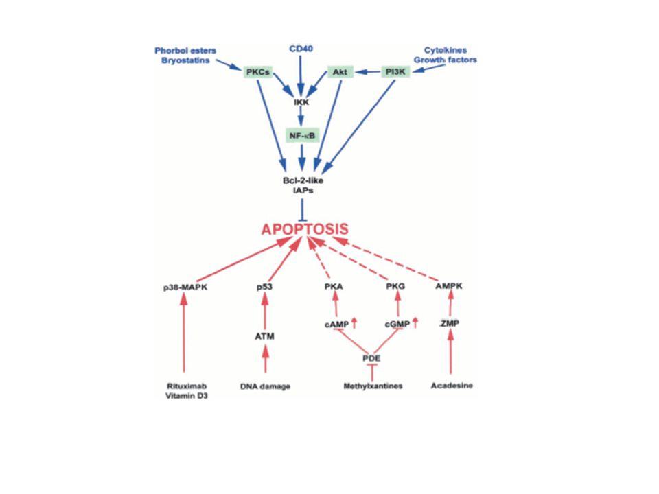 Ayırıcı tanı-2 Prolenfositik Lösemi Ya yeni oluşur ya da KLL den dönüşür Lökosit sayısı > 100.000 olup çoğu prolenfosittir Ortalama yaş 60 E > K Belirgin hepatosplenomegali Minimal adenomegali Kötü prognozlu