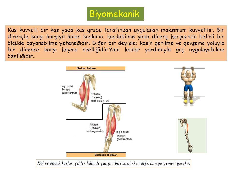 Biyomekanik Kas kuvveti bir kas yada kas grubu tarafından uygulanan maksimum kuvvettir.