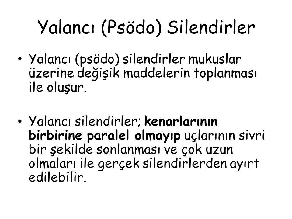 Yalancı (Psödo) Silendirler Yalancı (psödo) silendirler mukuslar üzerine değişik maddelerin toplanması ile oluşur. Yalancı silendirler; kenarlarının b