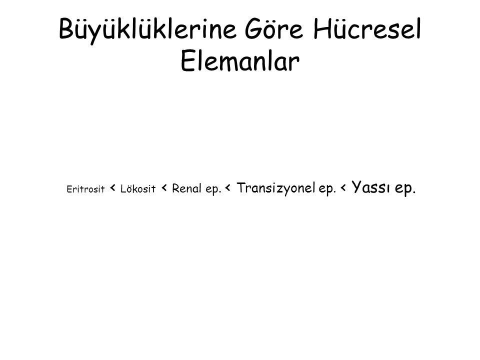 Büyüklüklerine Göre Hücresel Elemanlar Eritrosit < Lökosit < Renal ep. < Transizyonel ep. < Yassı ep.