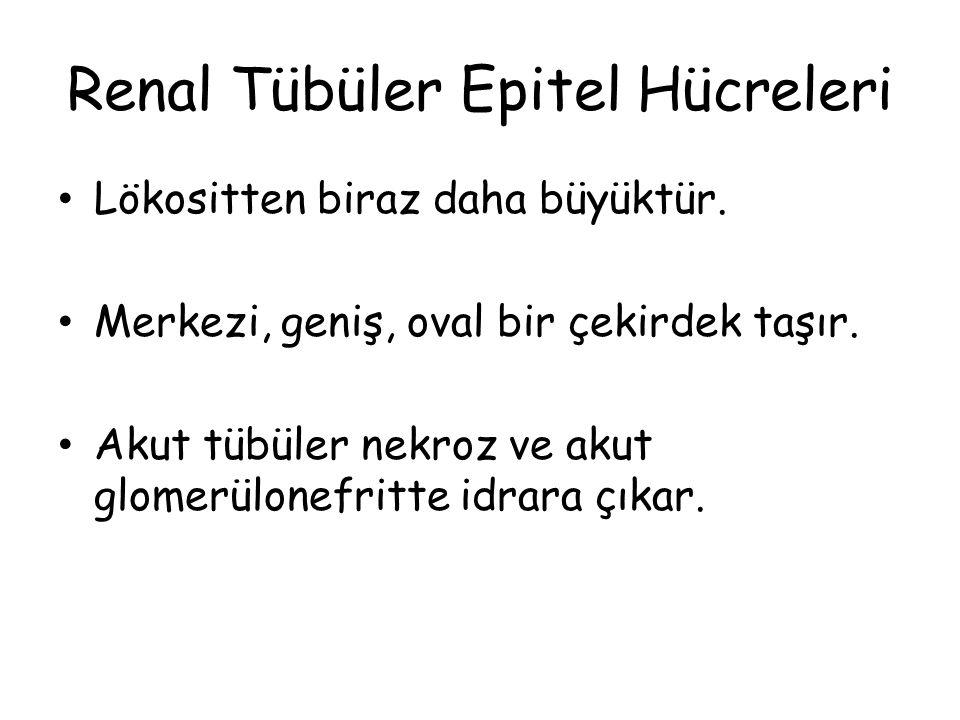 Renal Tübüler Epitel Hücreleri Lökositten biraz daha büyüktür. Merkezi, geniş, oval bir çekirdek taşır. Akut tübüler nekroz ve akut glomerülonefritte