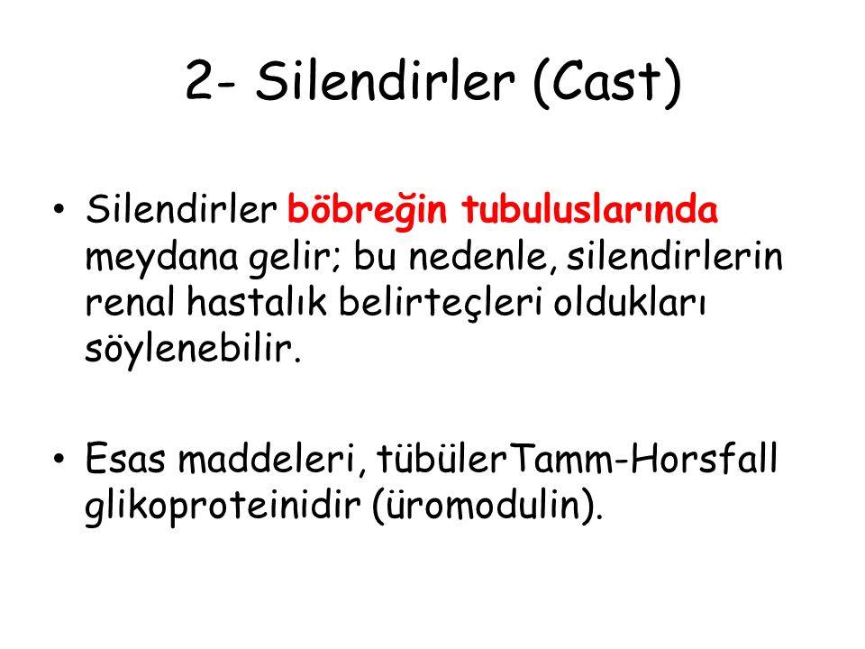 2- Silendirler (Cast) Silendirler böbreğin tubuluslarında meydana gelir; bu nedenle, silendirlerin renal hastalık belirteçleri oldukları söylenebilir.
