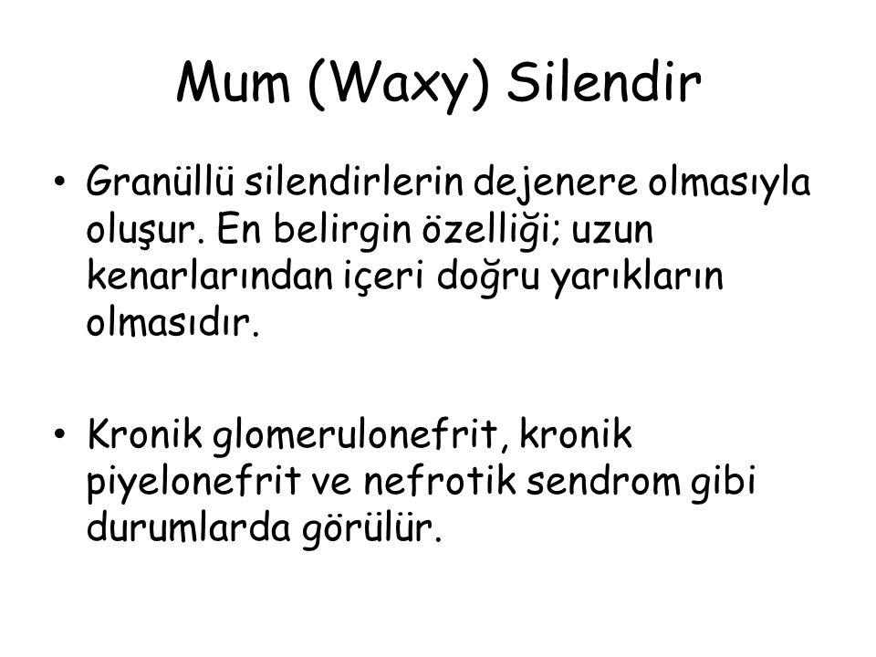 Mum (Waxy) Silendir Granüllü silendirlerin dejenere olmasıyla oluşur.