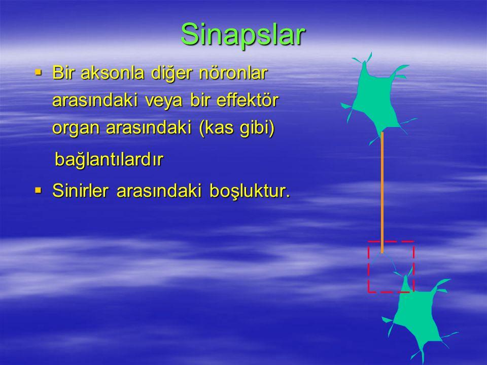 Sinapslar  Bir aksonla diğer nöronlar arasındaki veya bir effektör organ arasındaki (kas gibi) bağlantılardır bağlantılardır  Sinirler arasındaki boşluktur.