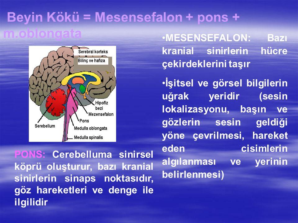 Beyin Kökü = Mesensefalon + pons + m.oblongata MESENSEFALON: Bazı kranial sinirlerin hücre çekirdeklerini taşır İşitsel ve görsel bilgilerin uğrak yeridir (sesin lokalizasyonu, başın ve gözlerin sesin geldiği yöne çevrilmesi, hareket eden cisimlerin algılanması ve yerinin belirlenmesi) PONS: Cerebelluma sinirsel köprü oluşturur, bazı kranial sinirlerin sinaps noktasıdır, göz hareketleri ve denge ile ilgilidir