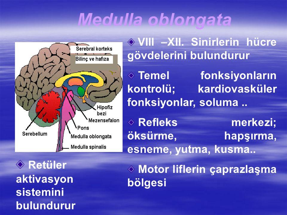 Medulla oblongata VIII –XII.