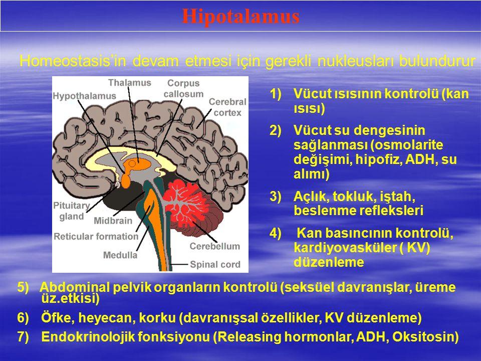 Hipotalamus 1)Vücut ısısının kontrolü (kan ısısı) 2)Vücut su dengesinin sağlanması (osmolarite değişimi, hipofiz, ADH, su alımı) 3)Açlık, tokluk, iştah, beslenme refleksleri 4) Kan basıncının kontrolü, kardiyovasküler ( KV) düzenleme 5) Abdominal pelvik organların kontrolü (seksüel davranışlar, üreme üz.etkisi) 6)Öfke, heyecan, korku (davranışsal özellikler, KV düzenleme) 7)Endokrinolojik fonksiyonu (Releasing hormonlar, ADH, Oksitosin) Homeostasis'in devam etmesi için gerekli nukleusları bulundurur