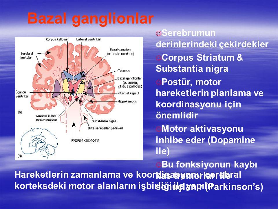 J Serebrumun derinlerindeki çekirdekler J Corpus Striatum & Substantia nigra J Postür, motor hareketlerin planlama ve koordinasyonu için önemlidir J Motor aktivasyonu inhibe eder (Dopamine ile) J Bu fonksiyonun kaybı kas tremorları ile sonuçlanır (Parkinson's) Bazal ganglionlar Hareketlerin zamanlama ve koordinasyonu cerebral korteksdeki motor alanların işbirliği ile yapılır.