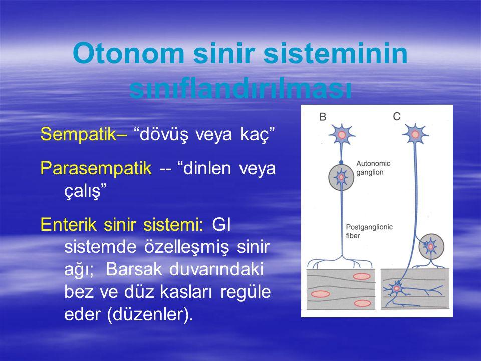 Otonom sinir sisteminin sınıflandırılması Sempatik– dövüş veya kaç Parasempatik -- dinlen veya çalış Enterik sinir sistemi: GI sistemde özelleşmiş sinir ağı; Barsak duvarındaki bez ve düz kasları regüle eder (düzenler).