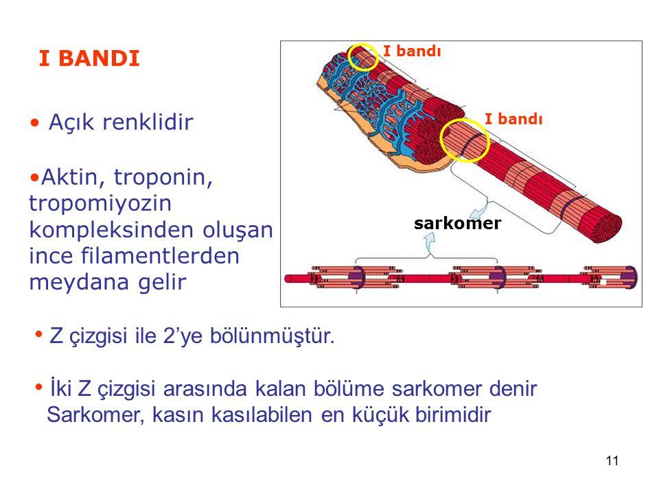 11 I BANDI sarkomer I bandı Açık renklidir Aktin, troponin, tropomiyozin kompleksinden oluşan ince filamentlerden meydana gelir Z çizgisi ile 2'ye böl
