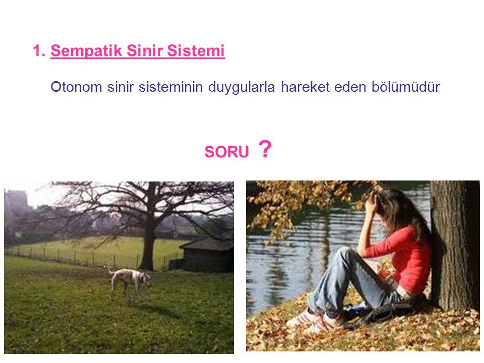 35 1.Sempatik Sinir Sistemi Otonom sinir sisteminin duygularla hareket eden bölümüdür SORU ?