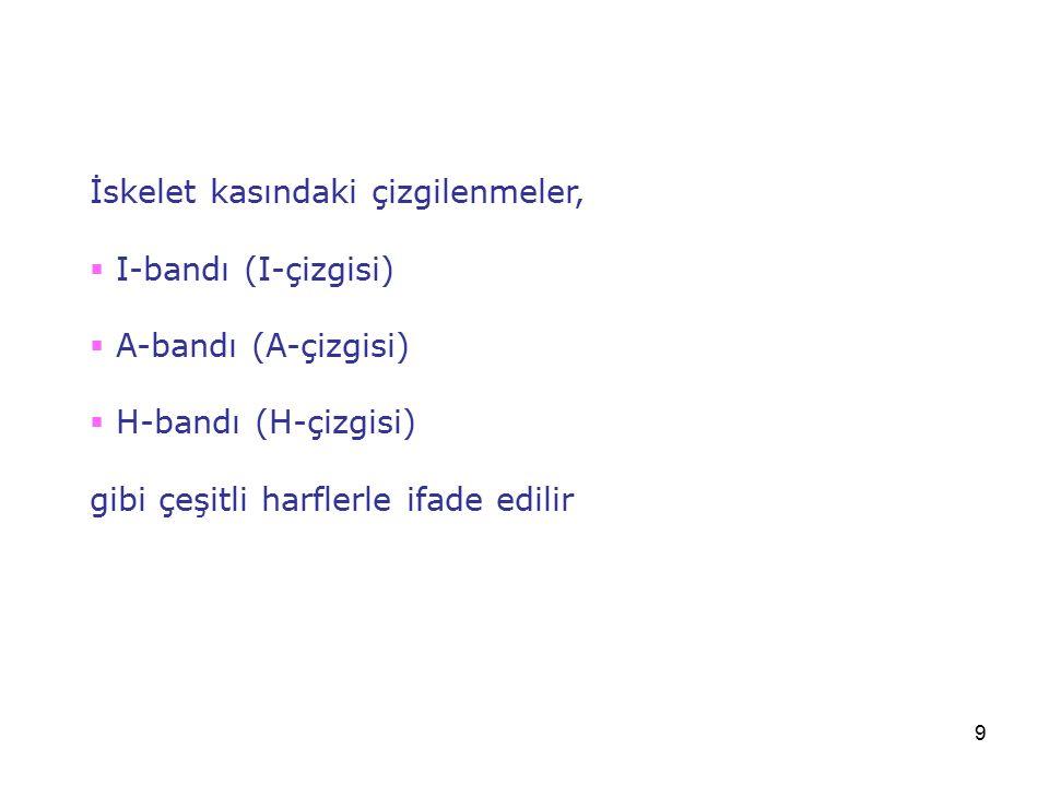 9 İskelet kasındaki çizgilenmeler,  I-bandı (I-çizgisi)  A-bandı (A-çizgisi)  H-bandı (H-çizgisi) gibi çeşitli harflerle ifade edilir