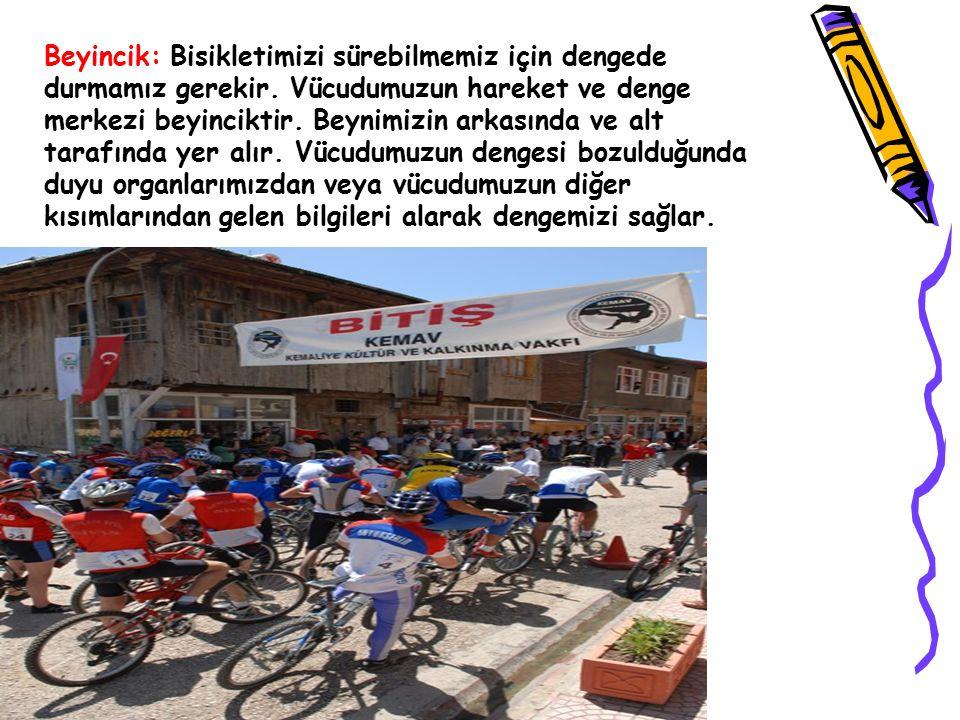 Beyincik: Bisikletimizi sürebilmemiz için dengede durmamız gerekir. Vücudumuzun hareket ve denge merkezi beyinciktir. Beynimizin arkasında ve alt tara
