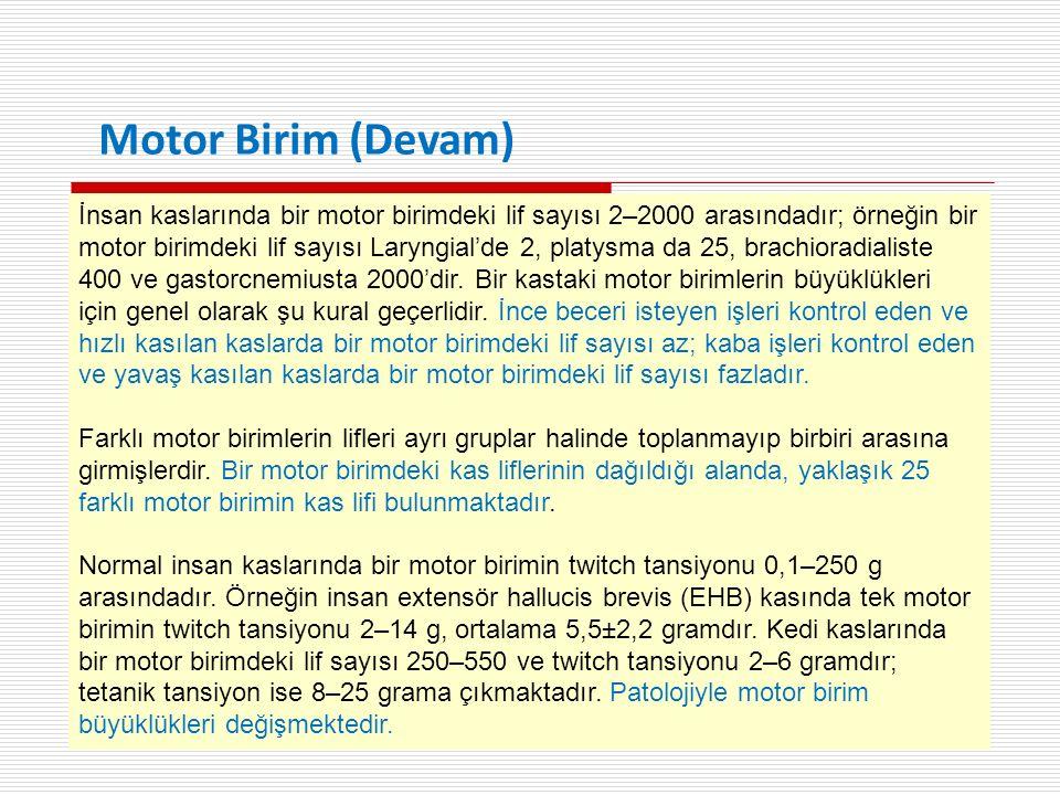 İnsan kaslarında bir motor birimdeki lif sayısı 2–2000 arasındadır; örneğin bir motor birimdeki lif sayısı Laryngial'de 2, platysma da 25, brachioradialiste 400 ve gastorcnemiusta 2000'dir.