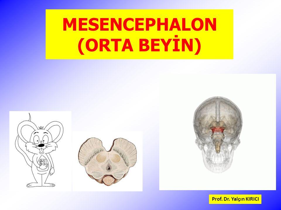 MESENCEPHALON (ORTA BEYİN) Prof. Dr. Yalçın KIRICI