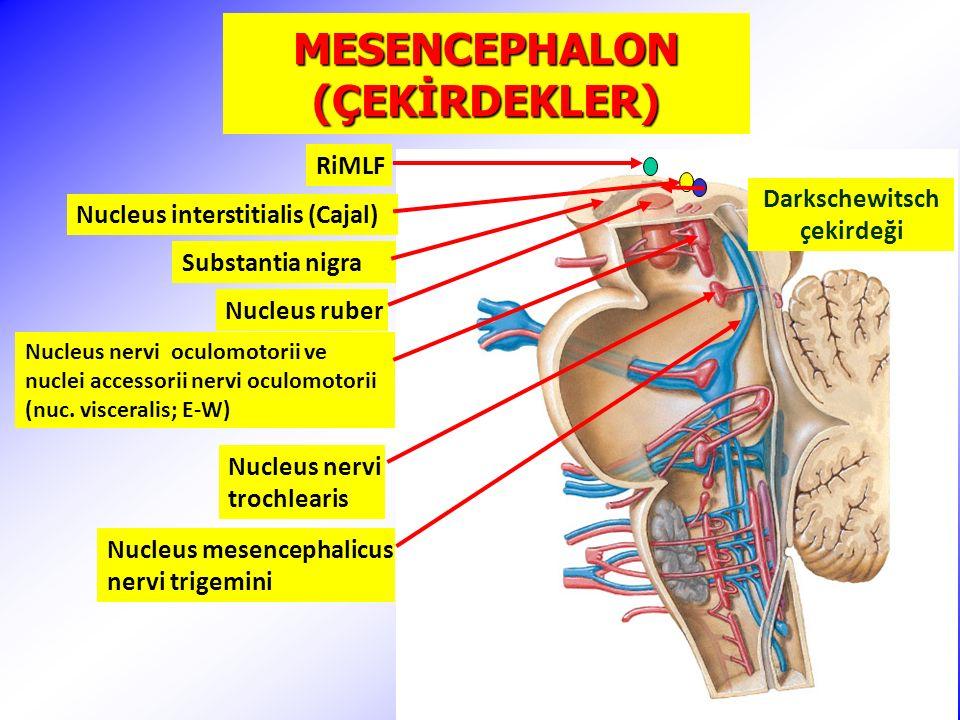 MESENCEPHALON (ÇEKİRDEKLER) Nucleus ruber Nucleus nervi oculomotorii ve nuclei accessorii nervi oculomotorii (nuc.