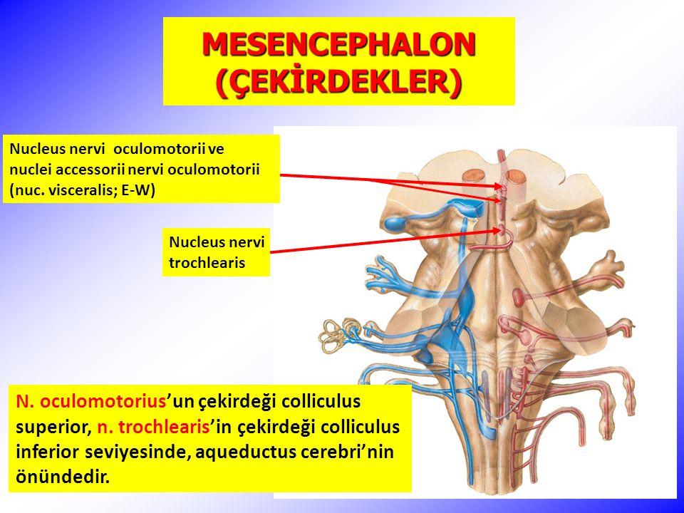 MESENCEPHALON (ÇEKİRDEKLER) Nucleus nervi trochlearis N.