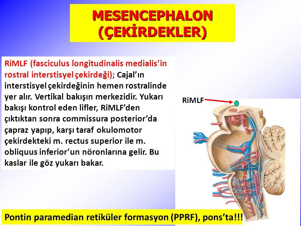 MESENCEPHALON (ÇEKİRDEKLER) RiMLF Pontin paramedian retiküler formasyon (PPRF), pons'ta!!.