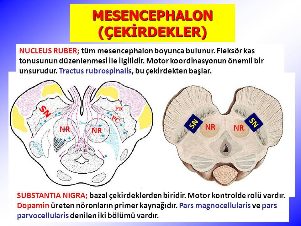 NR SN PR PC SN NUCLEUS RUBER; tüm mesencephalon boyunca bulunur.