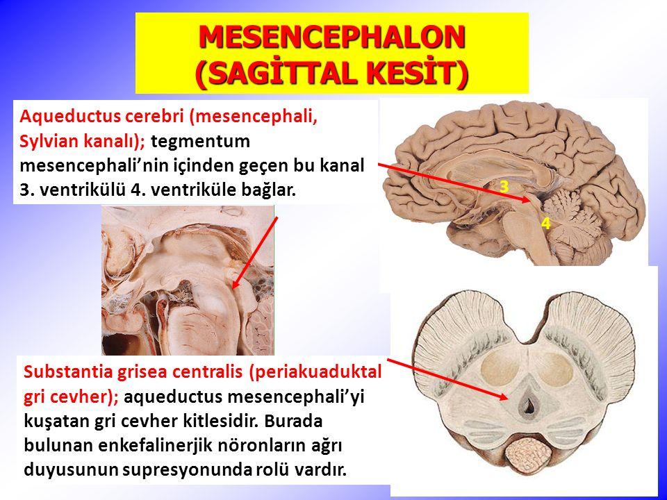 MESENCEPHALON (SAGİTTAL KESİT) Substantia grisea centralis (periakuaduktal gri cevher); aqueductus mesencephali'yi kuşatan gri cevher kitlesidir.