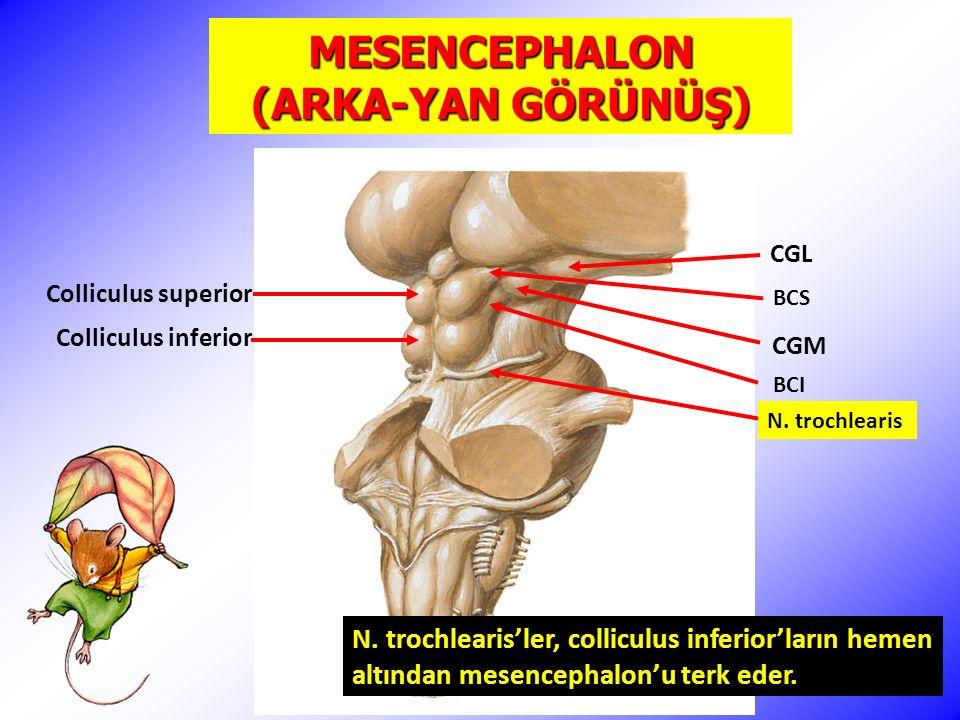 MESENCEPHALON (İÇTEN GÖRÜNÜŞ, SAGİTTAL KESİT) Tectum mesencephali (lamina tecti, lamina quadrigemina) Aqueductus cerebri (mesencephali)